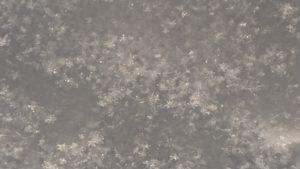 ゆきの結晶 雪 北海道むかわ町穂別の白樺樹皮 ハンドメイド工房 すりんぐ すりりんぐ工房cafe